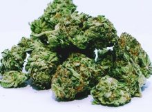 cannabis firm medmen acquires pharmacann